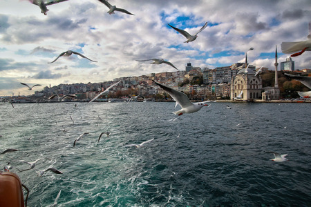 View from the ship to a flying seagull next to, and in the background a view of the architecturas of Turkish Istanbul, including the Mosque on the shore of the Bosporus Strait