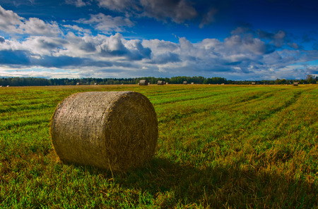 Bale of hay in the autumn field photo