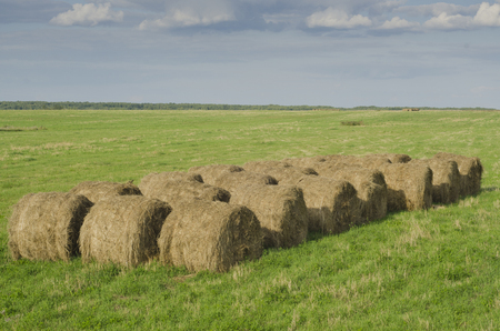 bails: Bales of hay in a field