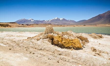 dry cow: Dry cow corpse in the Atacama Desert