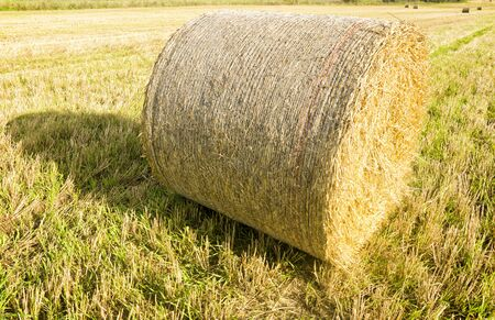 cropland: Bale of hay in the autumn field