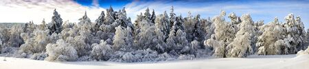 veiw: Panoramic Veiw of Snow Trees in the Ural Winter Forest Stock Photo