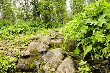 forest stream: Taiga forest stream creek Stock Photo