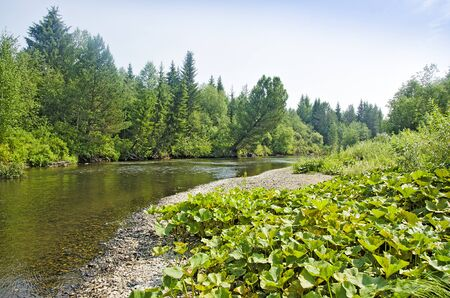 gauzy: River flowing through the taiga Stock Photo