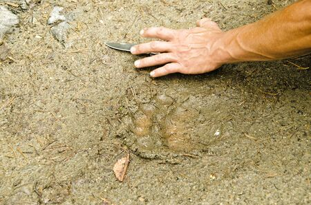 handbreadth: Trail Bear Paw in the Taiga