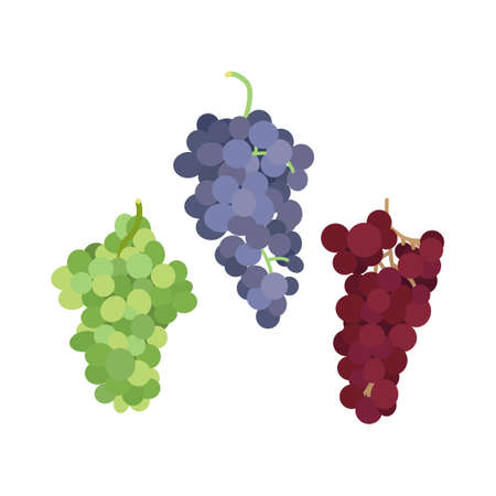 Vector illustration of a bunch of grapes of different varieties on a white background in a flat style. Set of grapes of different colors for design Illusztráció