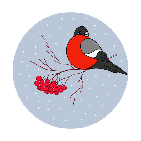 Christmas vector illustration - bullfinch with ashberries with holidays greeting Vektorové ilustrace
