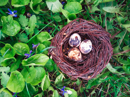 Easter eggs in nest painted by hand in blue color. quail, partridge eggs catholic and orthodox easter holiday
