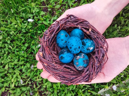 Girls hands holding a nest with quail eggs. Happy easter 写真素材