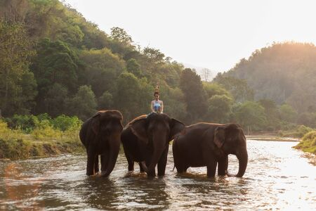 Asian girl and Asian elephants in the River. Foto de archivo