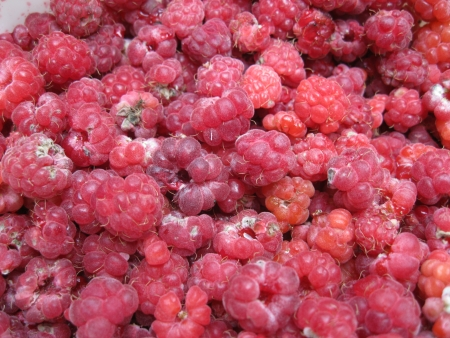 rosales: Red raspberries background Stock Photo