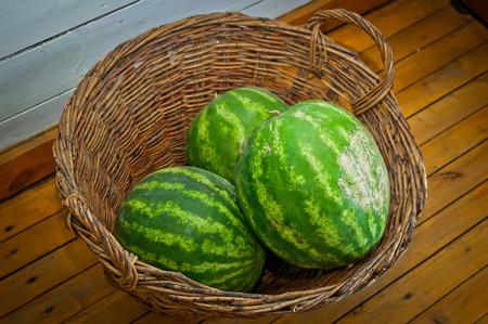 Watermelon in a large wicker basket, bright green watermelons in a large wicker basket