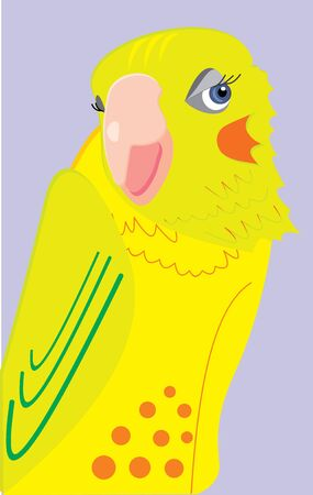 cheeks: cockatiel parrot makes eyes, embarrassed her flushed cheeks Illustration