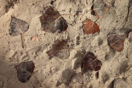 smolder: Sand background with dried autumn leaves evokes nostalgic memories and suggestive of ancient imprints of plants remaining in the limestone Stock Photo