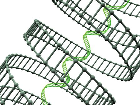 genomes: gene in DNA. 3d Stock Photo