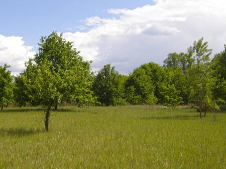 openspace: Green meadows and beautiful trees in the spring. Stock Photo