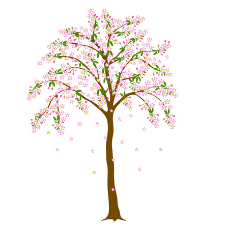Japanese cherry blossom tree with falling flowers