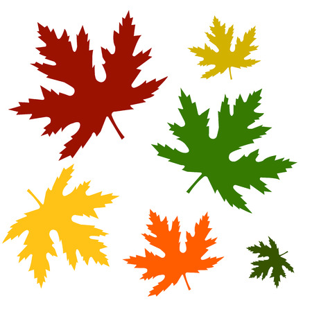 sycamore: Set of autumn maple leaves of different color and size Illustration