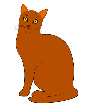 Red cat sitting on a white background
