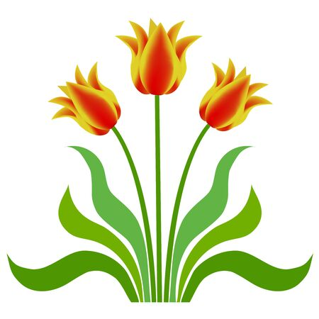 red stripe: Three yellow tulips with red stripe with leaves Illustration