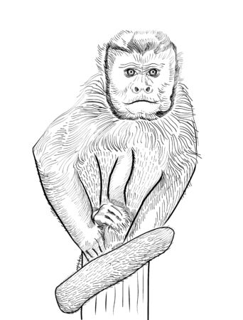 seated: Sketch of a seated monkey. Vector illustration