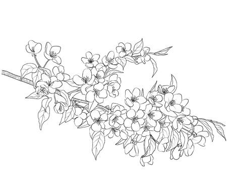 flowering apple tree branch Illustration