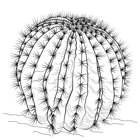 sketch of a cactus Illustration