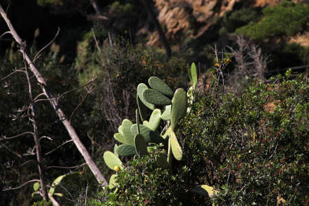 green cacti on a rock among leaves and bushes under the bright summer sun