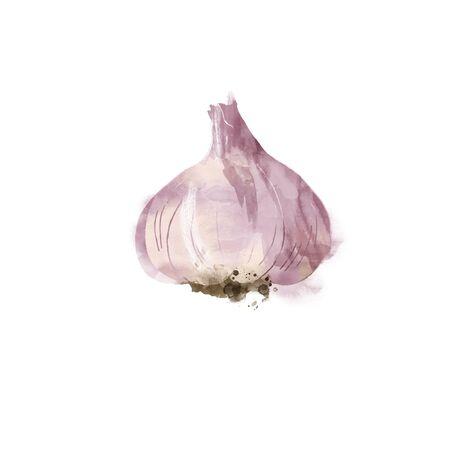 Watercolor vector illustration of garlic