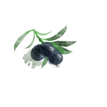 Watercolor vector illustration of olives