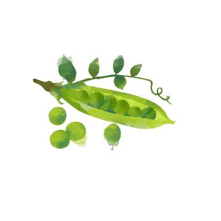 Watercolor vector illustration of peas