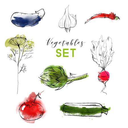 Vector watercolor vegetables background. Hand drawn sketch Illustration