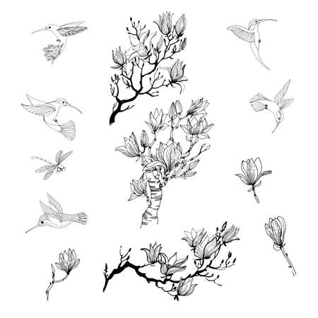 Asian garden. Hand drawn sketch and watercolor illustration of magnolia flower, hummerbirds and dragonfly