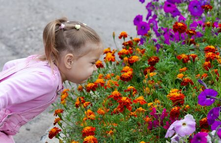 Cute child smelling french marigolds in flower bed in summer park