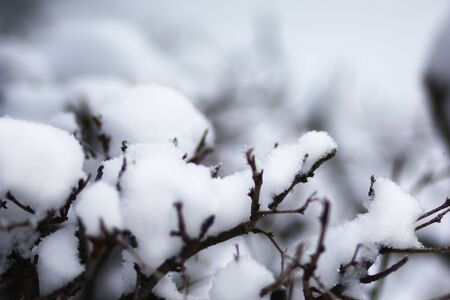 Tree branches covered by snow in the snowy park in winter