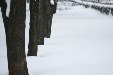 Trees in the snowy park in winter. Selective focus Stock Photo