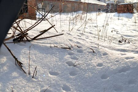 old barn in winter: Animals traces on snow. Sun reflects from snow surface.