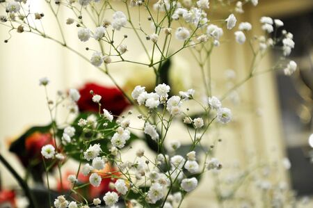 A branch of white gypsophila flower on blurred background. Stock Photo