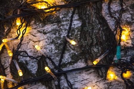 inter: Fairy lights on a tree