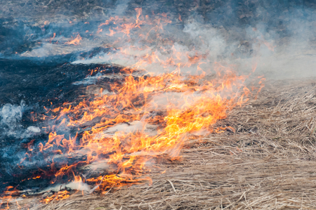 Forest fire. Smoke and flame are spreading on the ground under influence of strong wind. Stock Photo