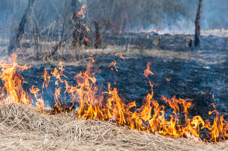 The front line of the spreading forest fire which separates dry grass and black ground with cinder left after fire Stock Photo