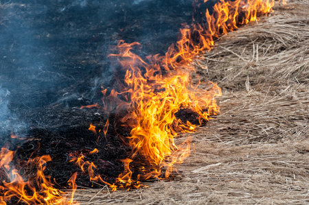 A closeup of a front line of a forest fire which looks like a border between two areas: one with dry grass and another with black dead grass remains Stock Photo