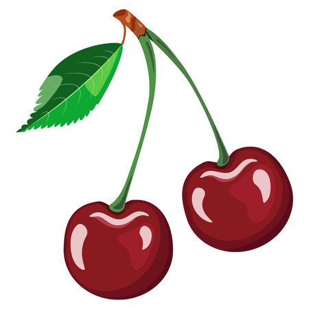 cherry red leaf vector pattern on white background Stock Illustratie