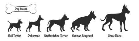 Vector silhouettes of 5 dog breeds on white background. Isolated icons of terriers, shepherd, doberman, great dane Çizim