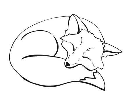 a cute sleeping fox. a fox lying with closed eyes curled up and laid its face on its tail. Vector illustration hand drawn picture. Ilustração