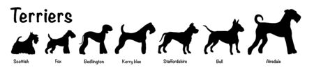Vector isolated silhouette of seven terriers dogs on white background. Seven terriers