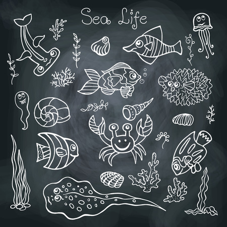 Funny Sea Life and Fish Doodle set on school Board Vector