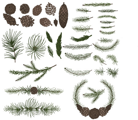 Various pine,spruce branches ,cones Vectores