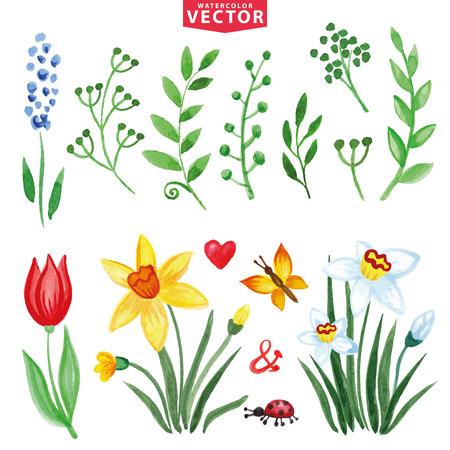 Aquarel bloemen, groene takken set.Spring, zomer Stock Illustratie