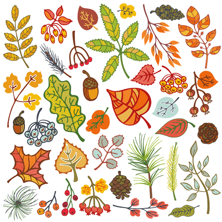 harvest: Autumn set.Colored eaves ,berries,pine branches,spruce cones and acorns.Fall wood harwest.Isolated vector.Natural Bright colors.For card,patterns,inviration,print and web illustration,decor. Illustration